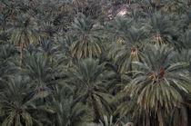 Tunesien, Chebika Region, Tamerza von Jason Friend