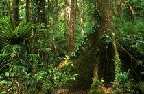 Australien, Queensland, Daintree National Park von Jason Friend