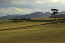 Scotland, Scottish Borders, Peebles by Jason Friend