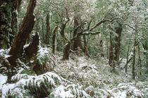 New Zealand, East Coast, Te Urewera National Park by Jason Friend