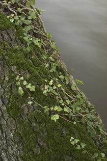 England, Cumbria, River Caldrew by Jason Friend