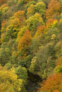 Vereinigtes Königreich, England, Northumberland. von Jason Friend