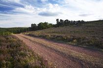 England Northumberland Rothbury Track by Jason Friend