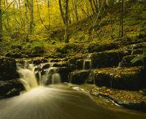 England Northumberland Briarwood Banks by Jason Friend