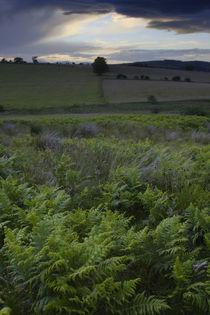 England, Northumberland, Rothbury by Jason Friend