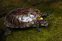 Turtle Surfacing by Eye in Hand Gallery