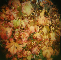 Close-up of autumnal grape leaves, Barberra grape leaves, Piedmont Region, Italy by Panoramic Images