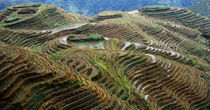 High angle view of a terraced field, Dragon's Back, China von Panoramic Images