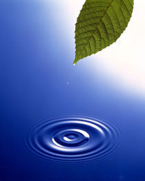 Green leaf floating above deep blue water and ripples von Panoramic Images
