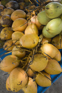 Close-up of coconuts for sale, Grand Baie, Pamplemousses, Mauritius von Panoramic Images