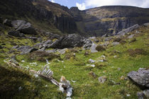 Dead Sheep in the Comeragh Mountains, County Waterford, Ireland by Panoramic Images