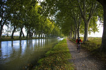 Lime Trees on Canal du Midi, Near Le Somail, Languedoc-Roussillon, France von Panoramic Images