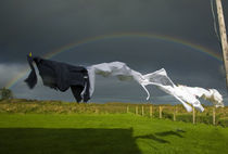 Rainbow, Stormy Sky and Clothes Line, Bunmahon, County Waterford, Ireland von Panoramic Images