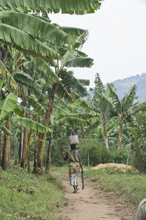 Woman walking in a banana grove with a machete by Panoramic Images
