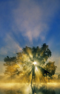 Sunstar through mist and silhouetted tree, Williams Pond, Maryland, USA. by Panoramic Images