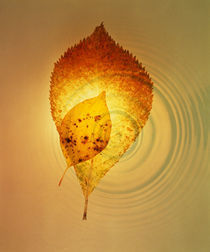 Superimposed amber leaves over circles with bright light by Panoramic Images