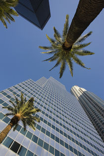 Low angle view of office buildings, Los Angeles, California, USA by Panoramic Images