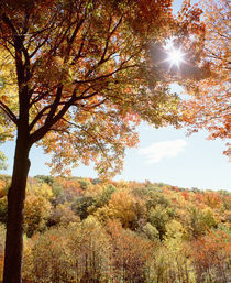 USA, New York State, Allegheny State Park, Autumn in the forest von Panoramic Images