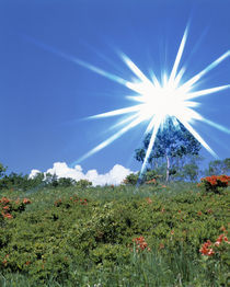 Bright star like bright light in blue sky by Panoramic Images