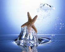 Starfish rising on water bubble toward bright light von Panoramic Images