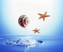 A shell and two starfish floating above bubbling water von Panoramic Images