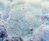 Close up of water droplets on lavender glass by Panoramic Images