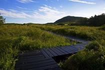 Preserved Bog Walkways, Fenor, Copper Coast, County Waterford, Ireland von Panoramic Images