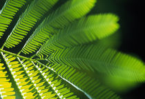 Close-up of leaves by Panoramic Images