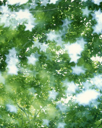 Kaleidoscopic scene with white stars with green and blue by Panoramic Images