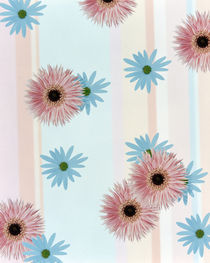 Pink and blue daisies on pink blue and white fabric von Panoramic Images