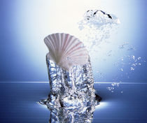 White scallop shell being raised on pillar of bubbling water by Panoramic Images