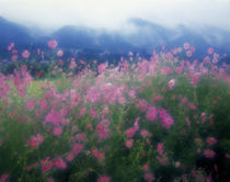 Wildflowers in a forest, Ohara, Kyoto Prefecture, Japan by Panoramic Images