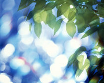 Green leaves above water sparkling with lights by Panoramic Images
