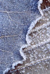 Frozen Leaf by Panoramic Images