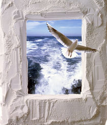 Dove flying toward camera through plaster frame with ocean waves in background by Panoramic Images