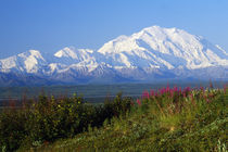 View of snow-covered Mount McKinley from Denali National Park, Alaska, USA. by Panoramic Images
