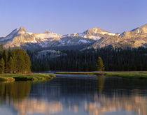 Tuolumne River flowing through the forest von Panoramic Images