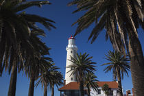 Palm trees in front of a lighthouse, Punta Del Este, Maldonado, Uruguay by Panoramic Images