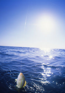 Caught Fish From Boat Deck Florida Keys Florida USA by Panoramic Images