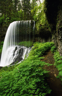 Lush foliage growing around Middle Falls by Panoramic Images