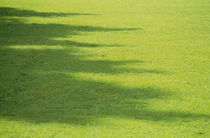 Shadow of trees on grass by Panoramic Images