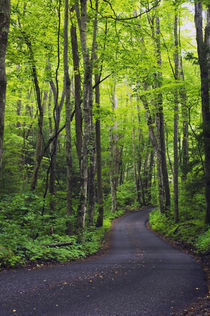 Roaring Fork Road winding through spring forest von Panoramic Images