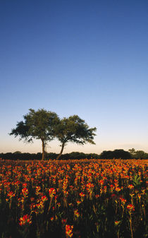Trees In Field Of Blooming Wildflowers by Panoramic Images