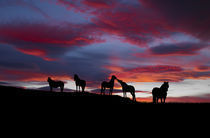 Silhouette of horses at night, Iceland von Panoramic Images