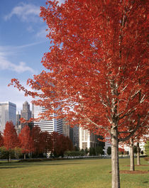 USA, Illinois, Chicago, Millennium Park, Trees in a park during Autumn by Panoramic Images