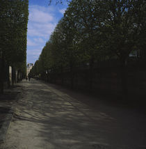 Trees on both sides of a street, Paris, France by Panoramic Images