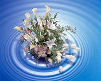 Bouquet of lilies rising from perfect circles of water von Panoramic Images