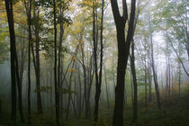 Misty Forest In Autumn by Panoramic Images