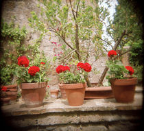 Potted plants on a wall, Italy by Panoramic Images