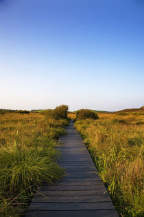 Walkway on the Fenor Bog, County Waterford, Ireland von Panoramic Images